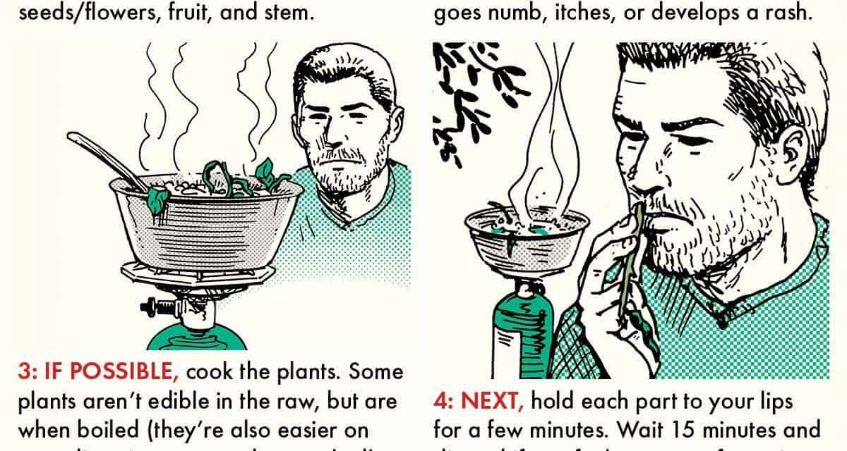How to Test if a Plant Is Edible