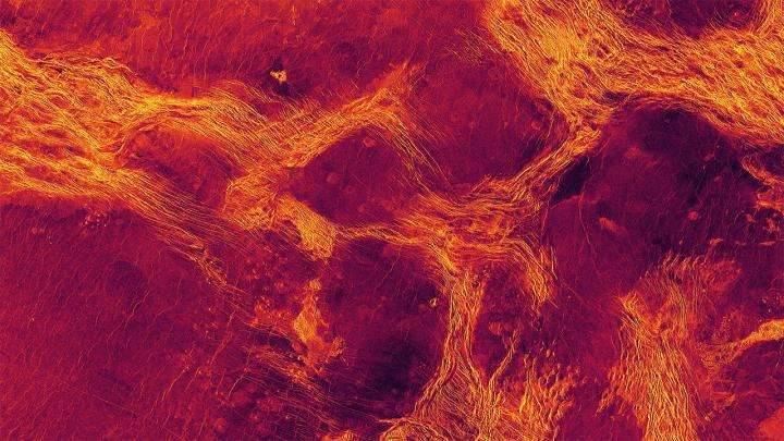 Scientists might have spotted tectonic activity inside Venus