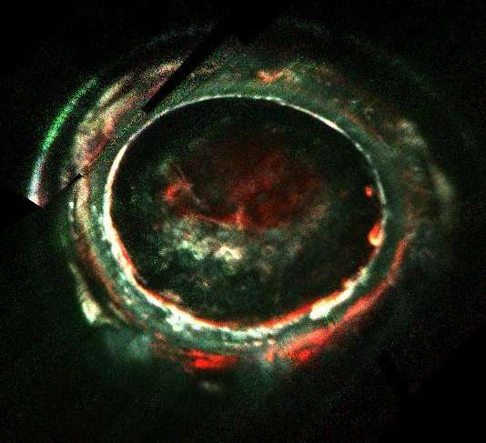 X-rays aren't the only type of aurora on Jupiter thought.  Here are some ultraviolet auroral images of Jupiter from the Juno Ultraviolet Spectrograph instrument. The images contain intensities from three spectral ranges, false-colored red, green and blue, providing qualitative information on precipitating electron energies (high, medium and low, respectively).