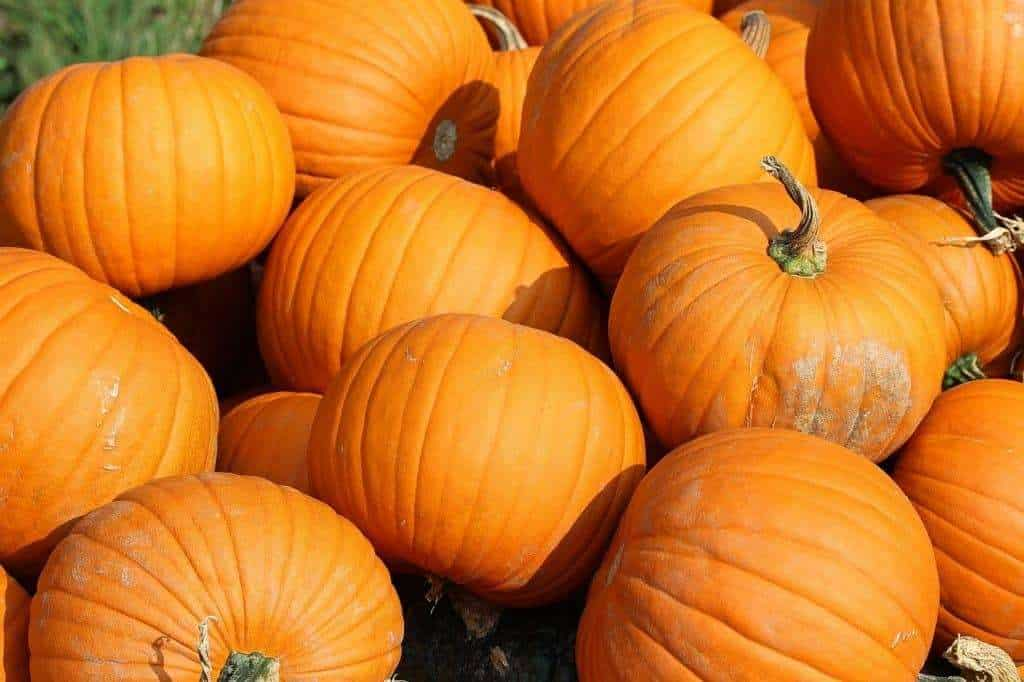 Visiting a Local Pumpkin Patch is an idea for Fall